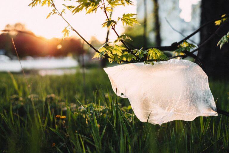 Fenomenul Greenwashing: Ce este, cum îl identificăm și ce putem face?