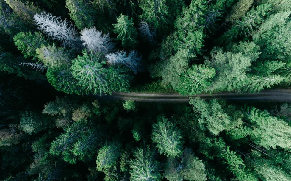 eco properties trees