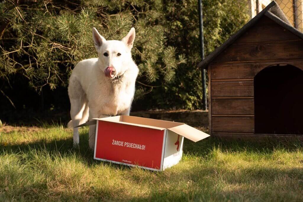 pies i pudełko termiczne